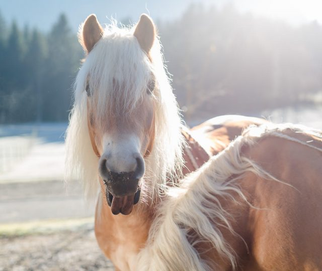 024_Sonnenmoor_Tiermoor-Pferde_2016-11-30_web